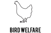 bird welfare
